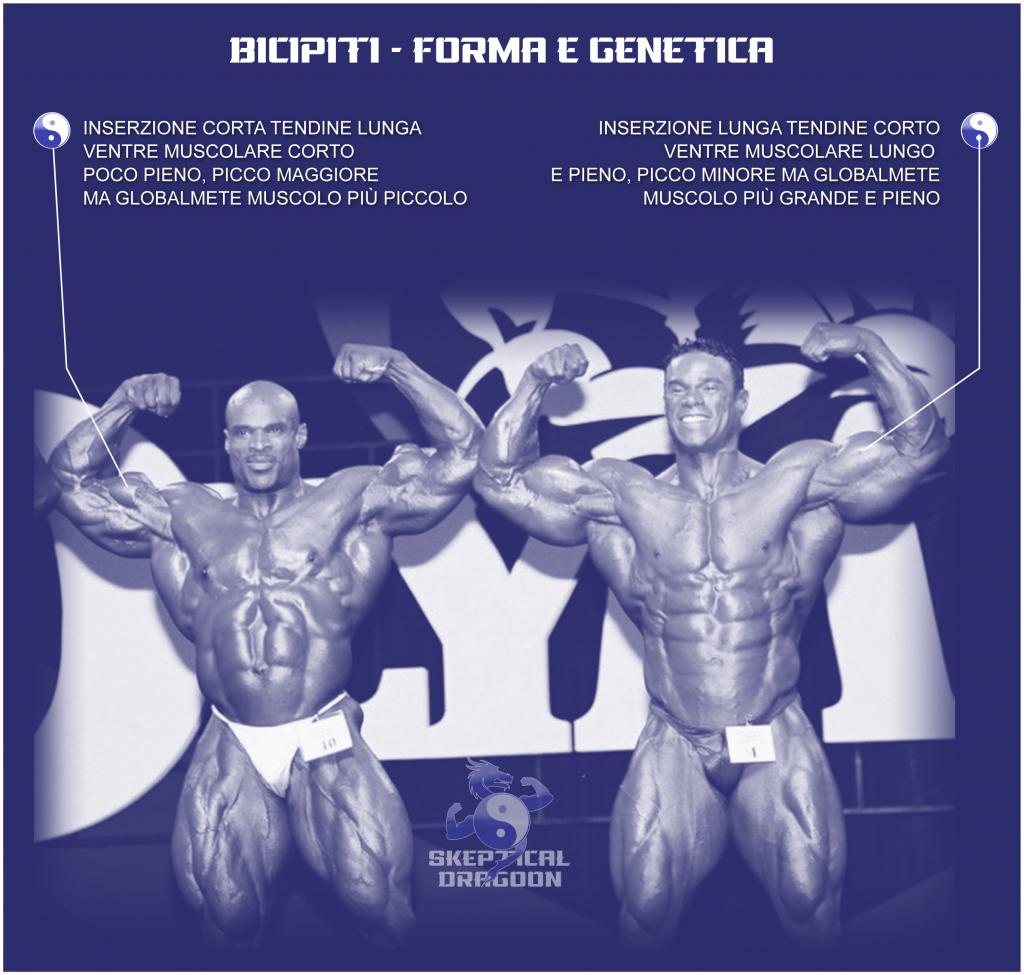 GENETICA BICIPITI