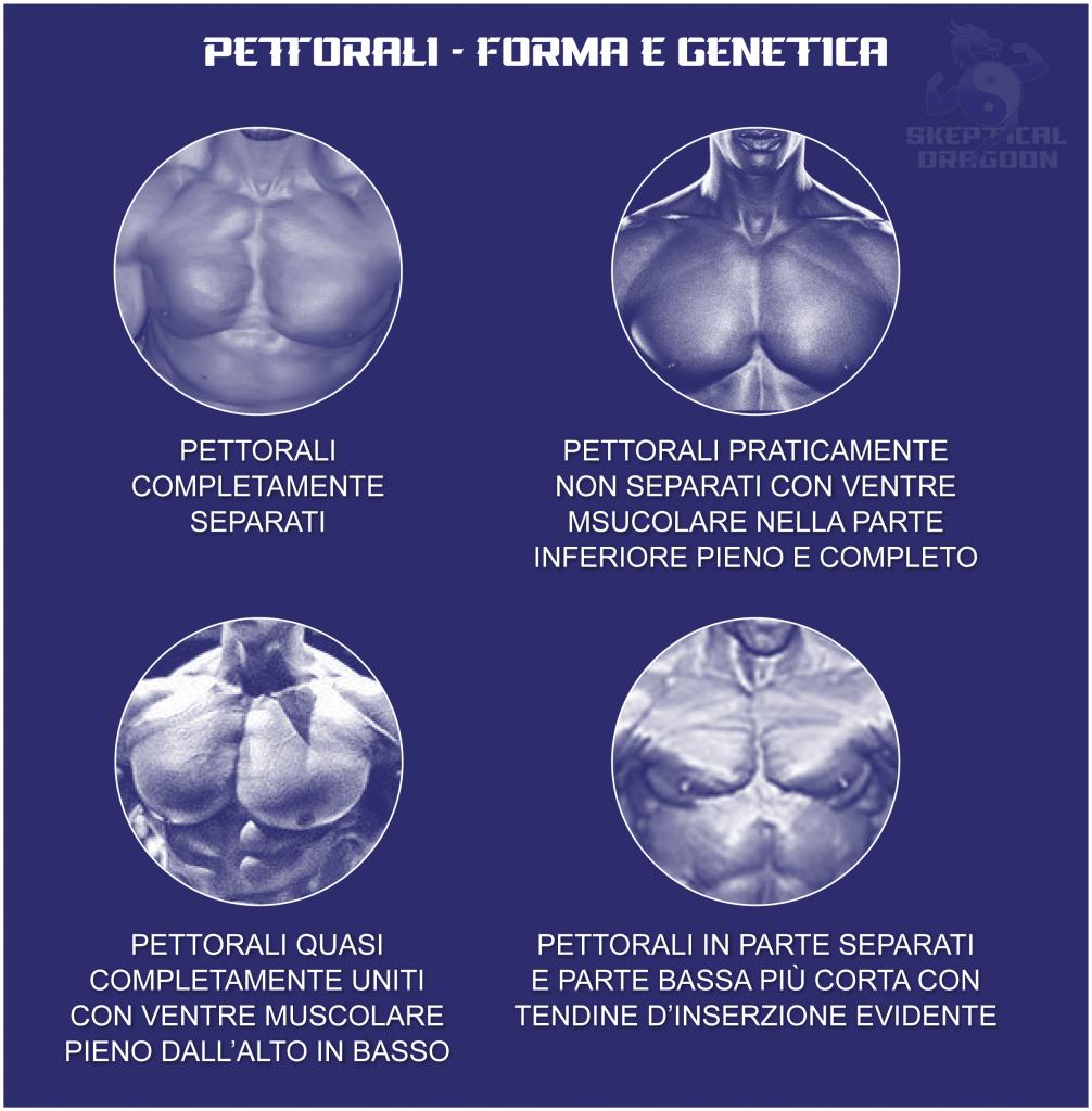 GENETICA PETTORALI