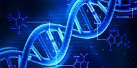 Genetica Muscoli Allenamento : quanto i geni influenzano i risultati ?