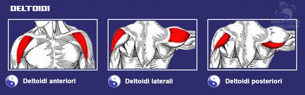 spalle. deltoidi, deltoidi posteriori,